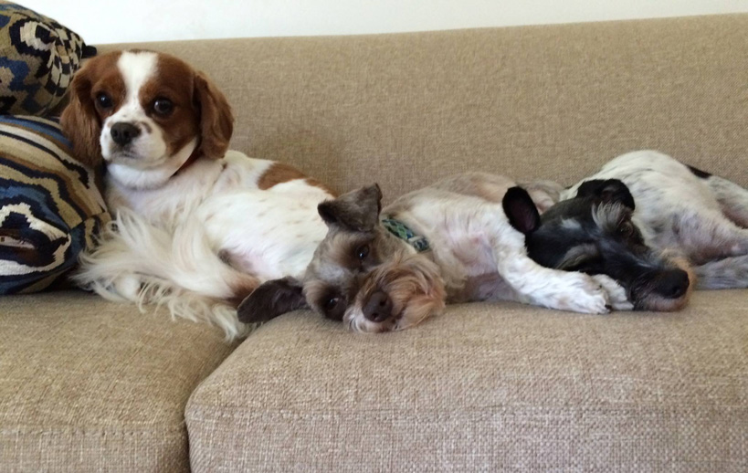 They rule the roost: Charlie, Theo and Eliot, my three best dudes.