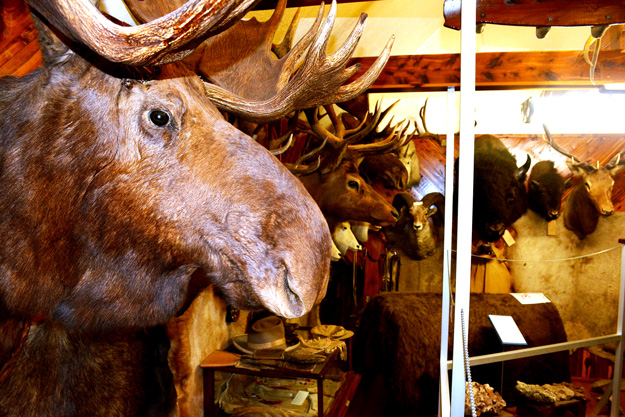 The museum's trophy room transports you to a big game safari.