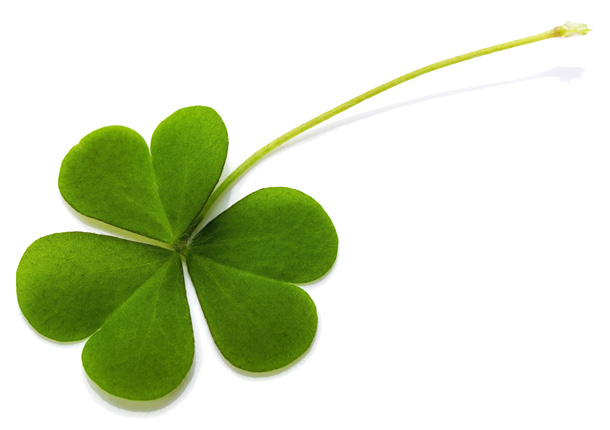 clover-shutterstock_193400456CROPPED