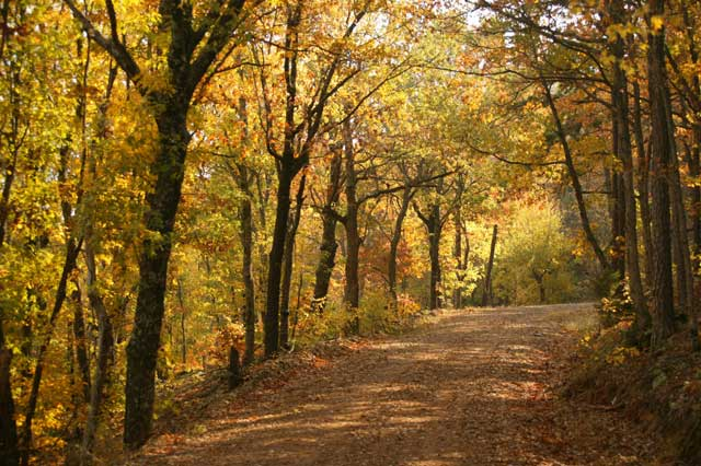 the Talimena Scenic Drive in Eastern Oklahoma is a local option for fall foliage viewing. Photo courtesy Oklahoma Tourism Department.